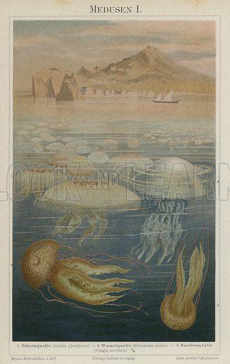 Jellyfish. Illustration from Meyer's Konversations-Lexicon, c1895.