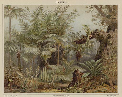 Ferns. Illustration from Meyer's Konversations-Lexicon, c1895.