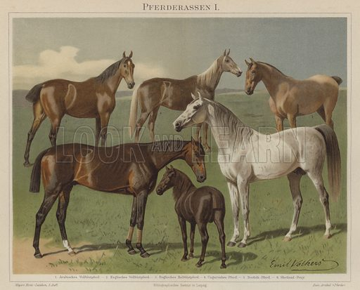 Horse breeds. Illustration from Meyer's Konversations-Lexicon, c1895.