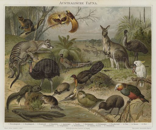 Australasian fauna. Illustration from Meyer's Konversations-Lexicon, c1895.