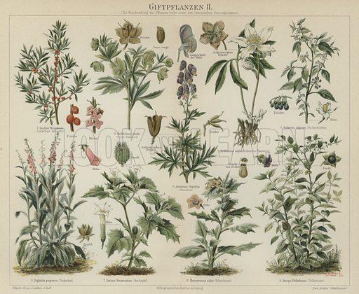 Poisonous plants. Illustration from Meyer's Konversations-Lexicon, c1895.