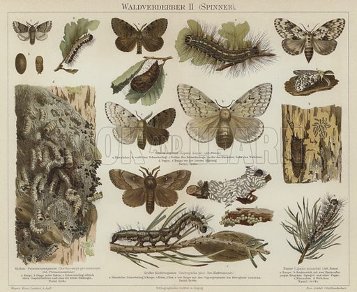 Forest pests: moths. Illustration from Meyer's Konversations-Lexicon, c1895.