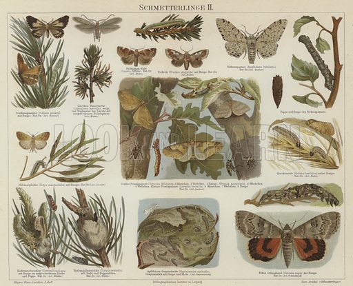 Butterflies and moths. Illustration from Meyer's Konversations-Lexicon, c1895.