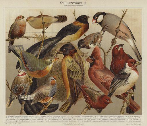 Birds. Illustration from Meyer's Konversations-Lexicon, c1895.