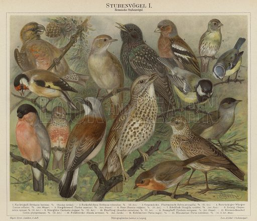 Birds. Illustration from Meyer's Konversations-Lexicon, c1895.
