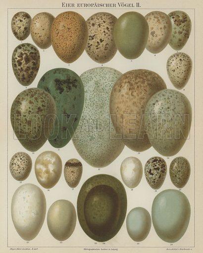 European birds' eggs. Illustration from Meyer's Konversations-Lexicon, c1895.