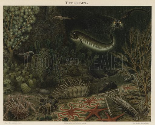 Deep sea fauna. Illustration from Meyer's Konversations-Lexicon, c1895.