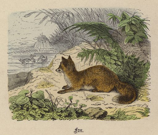 Fox. Illustration for Animal Life in Europe illustrated with coloured plates by F Specht (Religious Tract Society, c 1890).