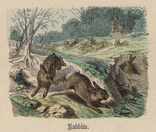 Rabbits. Illustration for Animal Life in Europe illustrated with coloured plates by F Specht (Religious Tract Society, c 1890).