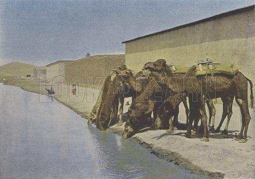 Chameaux au bord du Fleuve. Illustration for La France, Aquarelles Souvenirs de Voyages (Boulanger, c 1900).