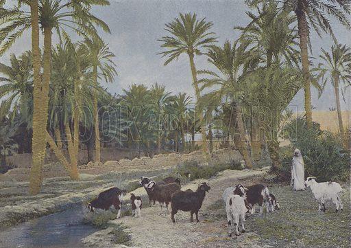 Oasis en Algerie. Illustration for La France, Aquarelles Souvenirs de Voyages (Boulanger, c 1900).