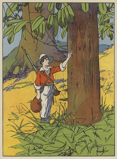 Fritz tried to pull one off. Illustration for The Swiss Family Robinson retold by Edith Robarts (Blackie, 1909).