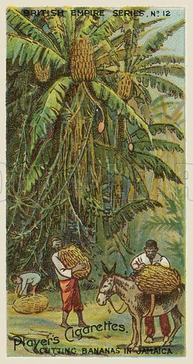 Cutting Bananas in Jamaica. Illustration for one of a series of cigarette cards on the subject of the British Empire published by Player's Cigarettes, early 20th century.
