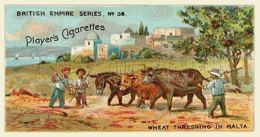 Wheat Threshing in Malta. Illustration for one of a series of cigarette cards on the subject of the British Empire published by Player's Cigarettes, early 20th century.