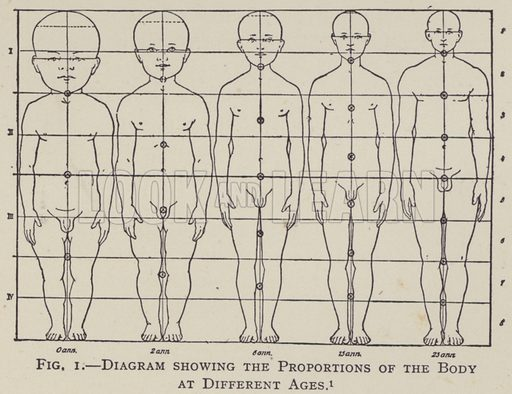 Diagram showing the Proportions of the Body at Different Ages. Illustration for The Teacher's Encyclopaedia edited by AP Laurie (Caxton, 1911).