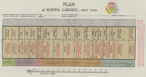 Plan of School Garden, first year. Illustration for The Teacher's Encyclopaedia edited by AP Laurie (Caxton, 1911).