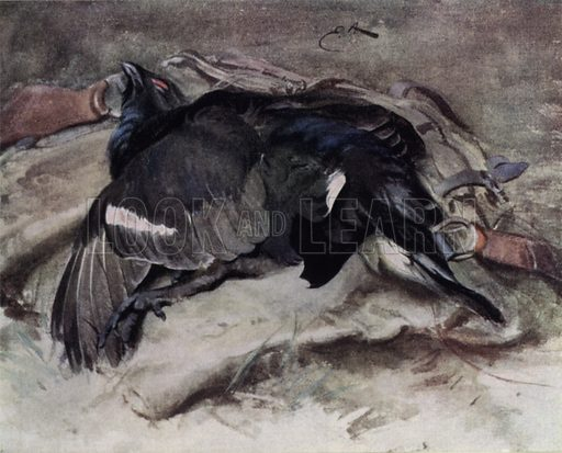 Blackcock. Illustration for Wild Sports and Natural History of the Highlands by Charles St John (TN Foulis, 1919).