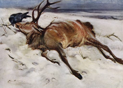 The dead stag. Illustration for Wild Sports and Natural History of the Highlands by Charles St John (TN Foulis, 1919).