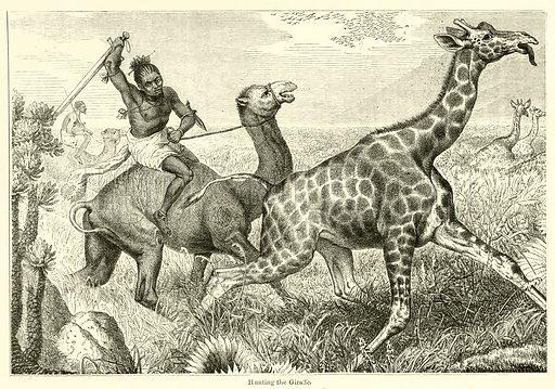 Hunting the Giraffe