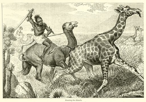 Hunting the Giraffe. Illustration for Chatterbox, 1870.