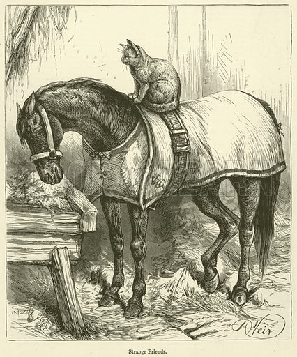 Strange Friends. Illustration for Chatterbox, 1888.