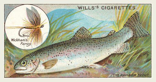 The Rainbow Trout, Wickham's Fancy