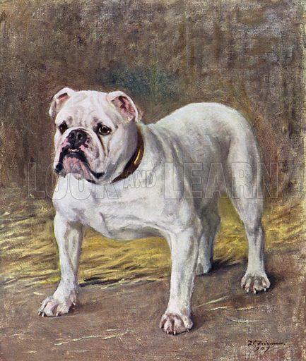 The Famous Bulldog Ch Silent Duchess