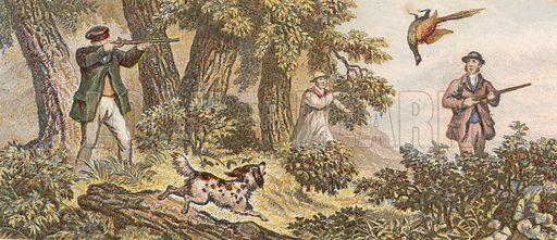 Pheasant shooting.