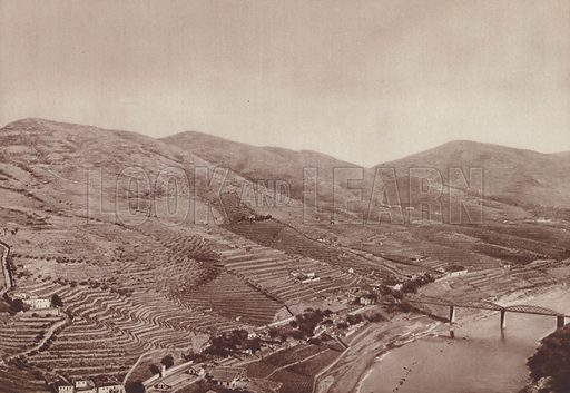 Vineyards on the banks of the Douro, Portugal. Illustration for L'Europe Par L'Image (Hachette, c 1933).  Gravure-printed.
