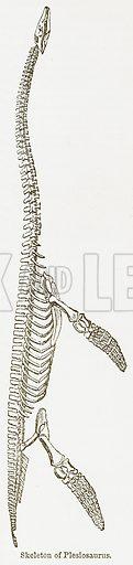 Skeleton of Plesiosaurus. Illustration from The National Encyclopaedia (William Mackenzie, c 1900).