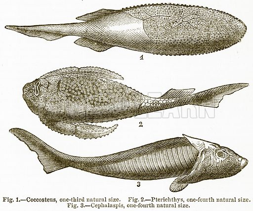 Coccosteus, One-Third Natural Size. Pterichthys, One-Fourth Natural Size. Cephalaspis, One-Fourth Natural Size. Illustration from The National Encyclopaedia (William Mackenzie, c 1900).