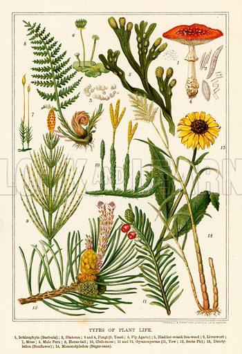 Types of plant life. Illustration fom The New Popular Educator (Cassell, c 1890).