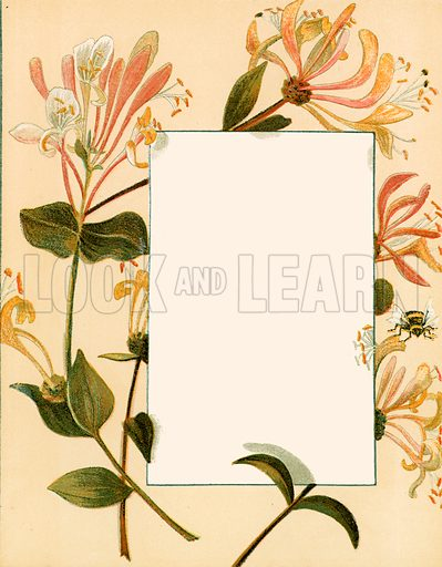 August. Floral design for The Birthday Book (George Routledge, c 1877).