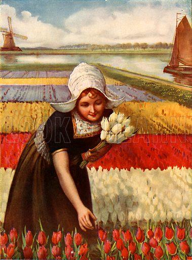 In tulip land. Illustration for The Wonder Book of Children (Ward Lock, c 1910).
