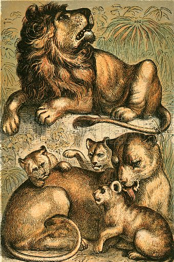 African Lion, Lioness and Cubs. Illustration for Warne's Picture Natural History Animals (Frederick Warne, c 1870).