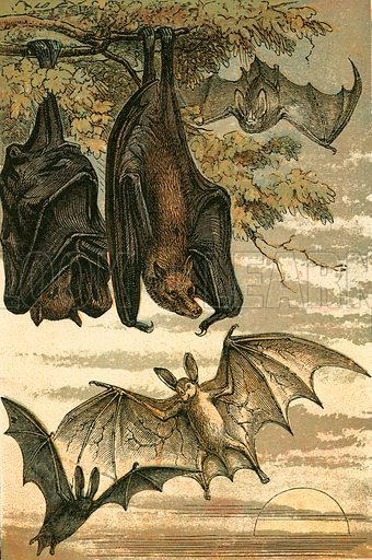 Flying Fox, Vampire Bat, Common Bat and Spectre Vampire. Illustration for Warne's Picture Natural History Animals (Frederick Warne, c 1870).