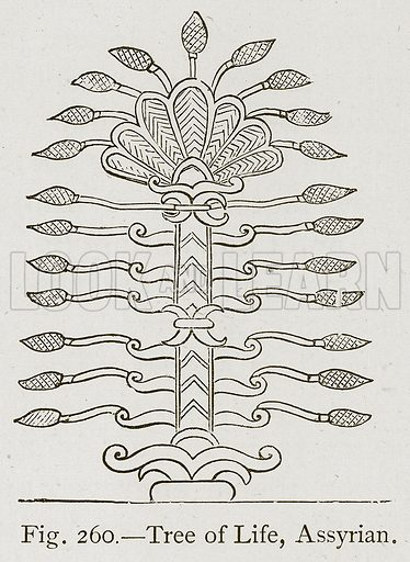 Tree of Life, Assyrian. Illustration for Historic Ornament by James Ward (Chapman and Hall, 1897).