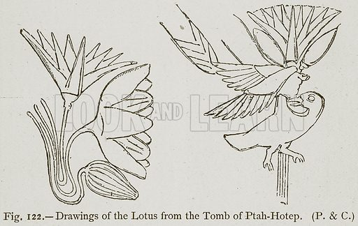 Drawings of the Lotus from the Tomb of Ptah-Hotep. Illustration for Historic Ornament by James Ward (Chapman and Hall, 1897).