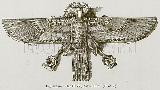 Golden Hawk; Actual Size. Illustration for Historic Ornament by James Ward (Chapman and Hall, 1897).