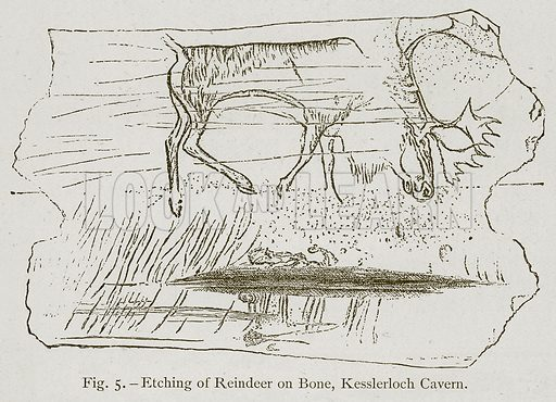Etching of Reindeer on Bone, Kesslerloch Cavern. Illustration for Historic Ornament by James Ward (Chapman and Hall, 1897).