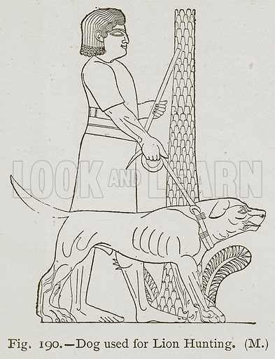 Dog used for Lion Hunting. Illustration for Historic Ornament by James Ward (Chapman and Hall, 1897).