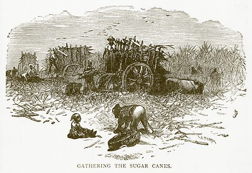 Gathering the Sugar Canes. Illustration for Aunt Louisa's Book of Common Things by L Valentine (Frederick Warne, c 1880).