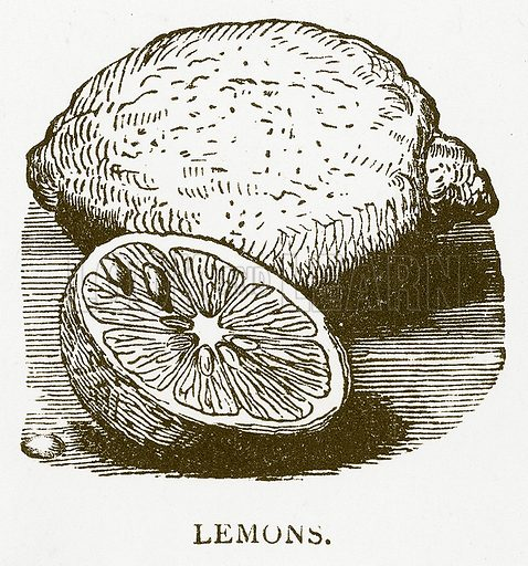 Lemons. Illustration for Aunt Louisa's Book of Common Things by L Valentine (Frederick Warne, c 1880).