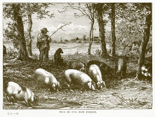 Pigs in the New Forest. Illustration for Aunt Louisa's Book of Common Things by L Valentine (Frederick Warne, c 1880).