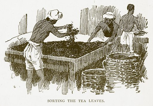Sorting the Tea Leaves. Illustration for Aunt Louisa's Book of Common Things by L Valentine (Frederick Warne, c 1880).