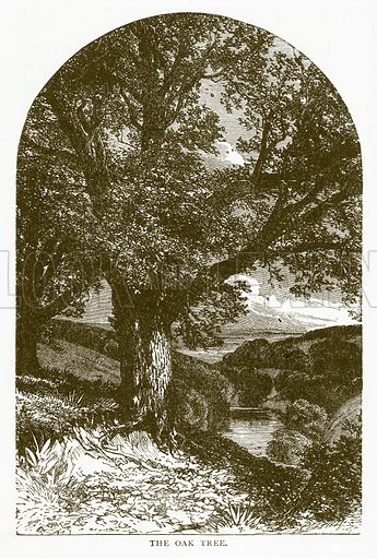 The Oak Tree. Illustration for Aunt Louisa's Book of Common Things by L Valentine (Frederick Warne, c 1880).