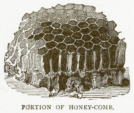 Portion of Honey-Comb. Illustration for Aunt Louisa's Book of Common Things by L Valentine (Frederick Warne, c 1880).