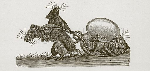 Rats carrying home an egg. Nineteenth century comic picture reprinted in an edition of Cole's Funny Picture Book.
