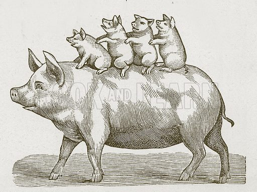 Pig with its piglets.  Nineteenth century comic picture reprinted in an edition of Cole's Funny Picture Book.