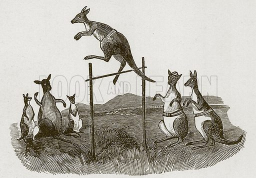 Kangaroos jumping.  Nineteenth century comic picture reprinted in an edition of Cole's Funny Picture Book.
